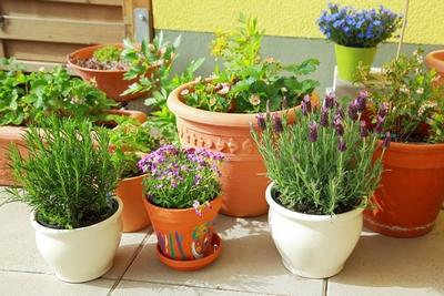Pots Of Joy Home Instead Senior Care Of Charlottesville